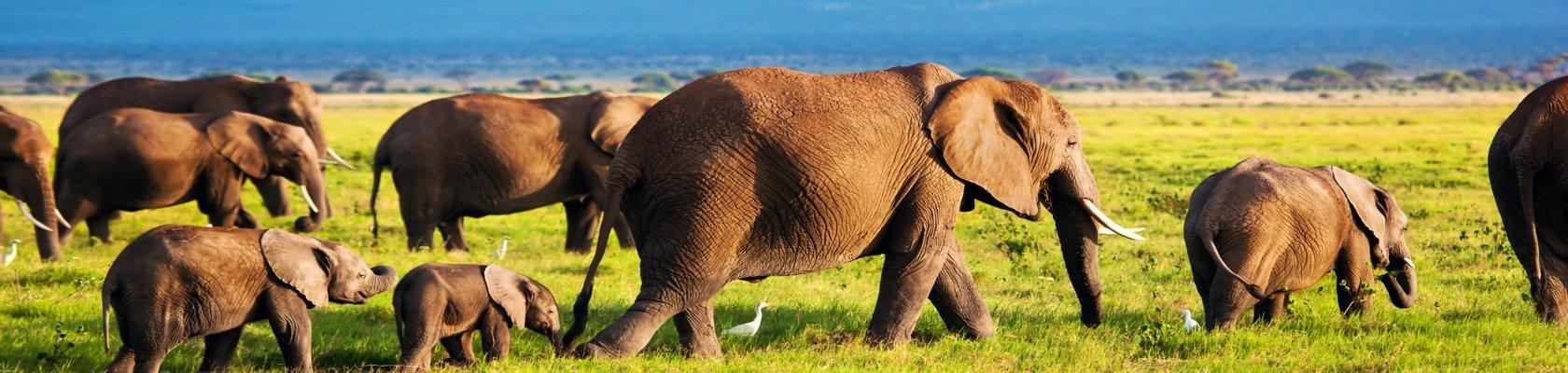 Op safari in Chobe Nationaal Park