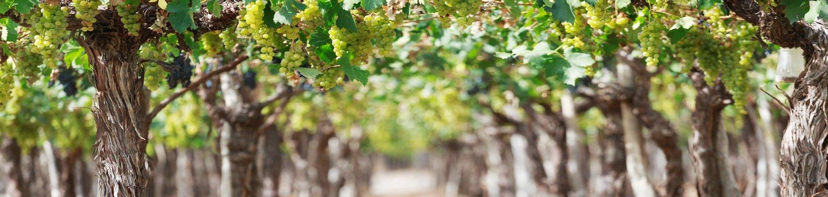 Wijngebied, Mendoza