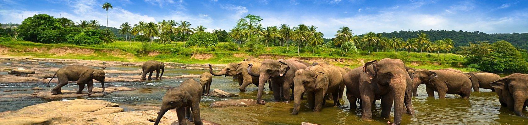 Olifanten zien