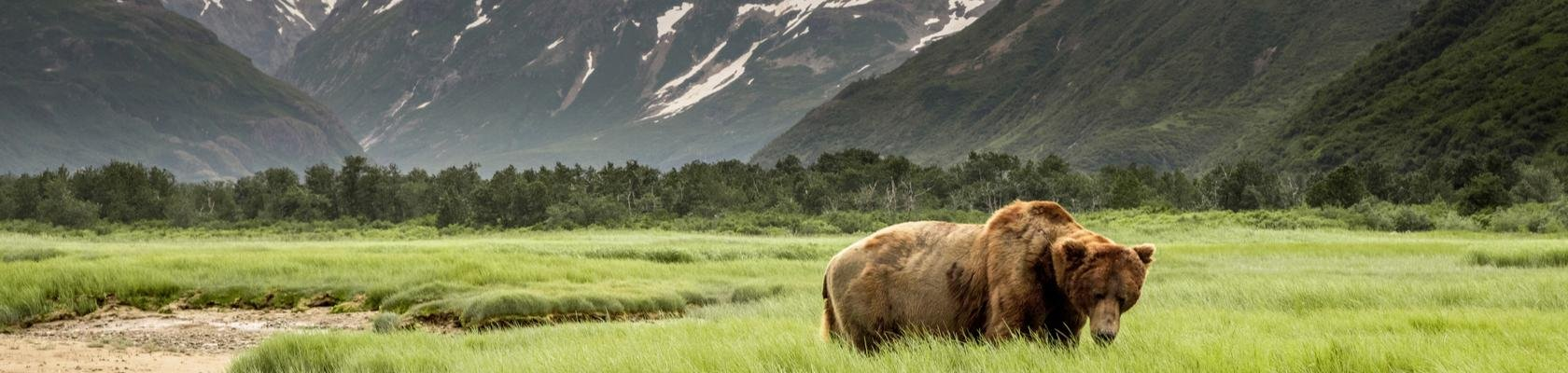 dating in rode herten Alberta