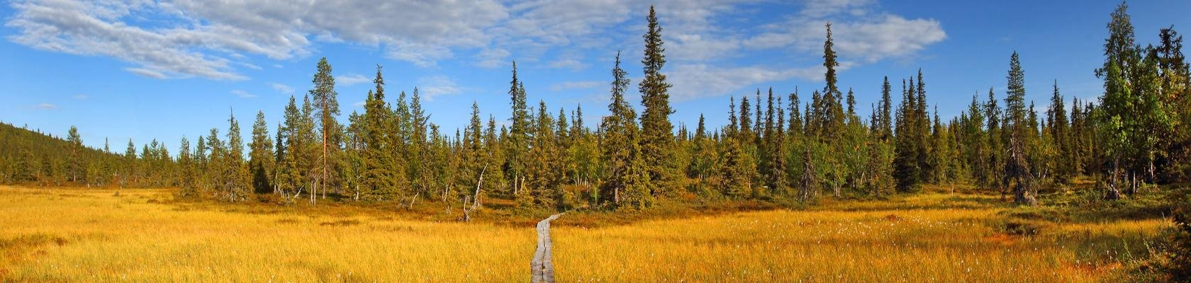 Wandelpad in Urho Kekkonen Nationaal Park