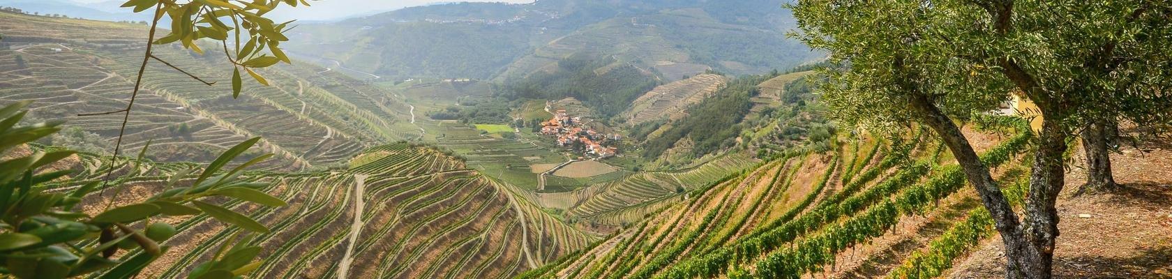 De Douro vallei bij Lamego